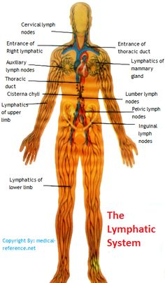 How Does the lymphatic system Work?  #LymphaticSystem #Lymphatic #lymphnode #lymph