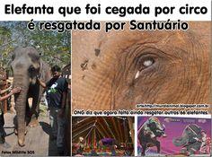 Mural Animal: Elefanta que foi cegada por circo é resgatada por Santuário