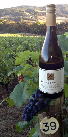 Drinking Pinot Noir on an organic 24 year old vineyard is magical! Youngberg Hill, McMinnville OR