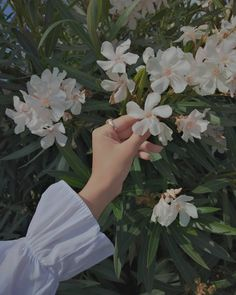 Cute Flower Wallpapers, Cute Pastel Wallpaper, Scenery Wallpaper, Cute Wallpaper Backgrounds, Profile Pictures Instagram, Ideas For Instagram Photos, Creative Instagram Photo Ideas, Paint Photography, Girl Photography Poses