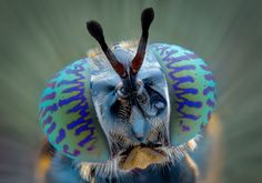 Incredible creatures up-close