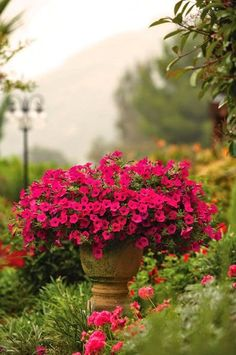 "Once again I am reminded that if you want a huge ""show"" of color - plant petunias. Just gorgeous....!!"