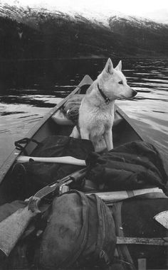 canoe and a dog...what more could you need?
