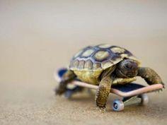 Skateboarding turtle :-)