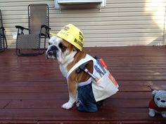 DIY+Dog+Halloween+Costumes | Diy Halloween dog costume | Dogs