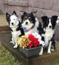 Merry Christmas from Clan Applegarth! Ceilidh, Seeker and Gem