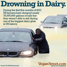 US dairy cattle are producing far more milk than people want. 800 millions pounds of cheese and 272 pounds of butter are rotting in storage. Yet farmers keep overbreeding their cattle, hoping for another government bailout. It's time for them to realize that dairy is on its way out. http://veganstreet.com/dailymeme-5-24-17.html