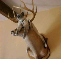 Curiosities: Cats Don't Care