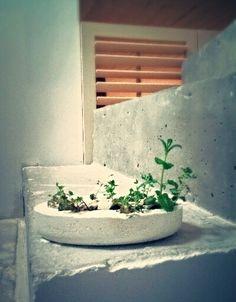 My first concrete planter: white beton cire & wild herbs from my garden