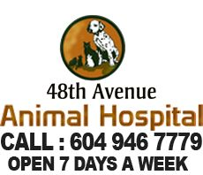 48th Avenue Animal Hospital 5020 48 Avenue, Delta, BC V4K 1V8 604-946-7779 MONDAY TO FRIDAY: 8 AM TO 8 PM SATURDAY and SUNDAY: 9 AM TO 5 PM