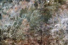 Mountain woods - null