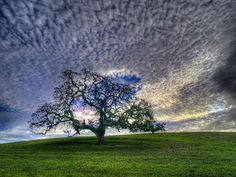 Mighty Oak below the clouds. Outdoor Pictures, Cool Pictures, Cool Photos, Beautiful Pictures, Mother Earth, Mother Nature, Beautiful World, Beautiful Places, Choose Life
