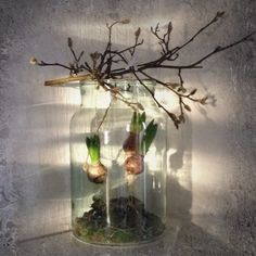 Place moss in a large glass jar, free hyacinths from soil and tie with sisal on a knotty branch. Hyacinth Flowers, Water Hyacinth, Large Glass Jars, Glass Vase, Sisal, Crocus Bulbs, Diy Easter Decorations, Plantar, Easter Crafts For Kids