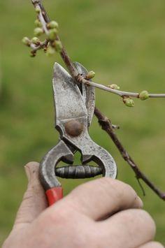 Porch Garden, Pruning Shears, Geraniums, Gardening Tips, Garden Tools, Backyard, Green, Fruit, Vegetables