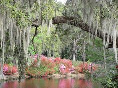 For sale on on fineartamerica.com/anitaadams #EsthervillePlantation