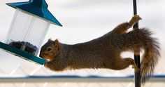 how to keep squirrels away from my bird feeder