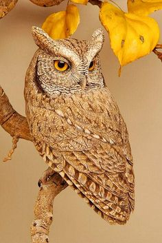 Pájaros tallados Colibríes tallados, aves rapaces y pájaros cantores por Lona Hymas-Smith . Beautiful Owl, Animals Beautiful, Cute Animals, Beautiful Patterns, Beautiful Pictures, Owl Photos, Owl Pictures, Motifs Animal, Owl Bird