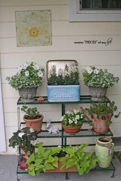 Container gardening 2