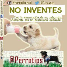 No se puede improvisar con la alimentación de un cachorro. Todo debe ser prescrito por el veterinario #perrotips
