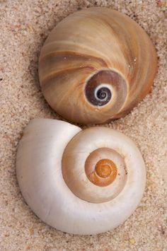 perfect seashells