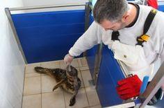 Une clinique pour les phoques - 1jour1actu - L'actu pour tous les enfants !
