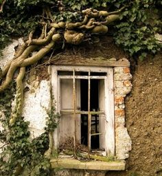 Vine wrapped window.