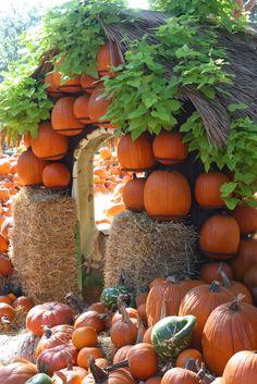Pumpkin Town at Dallas Arboretum, Happy Fall Y'all.