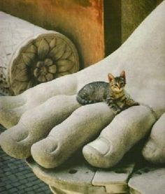 Over 300,000 stray cats live in Rome, descendants of Egyptian cats brought there 3,000 years ago. These cats are not wild, but need human help to survive.  http://www.romancats.com/