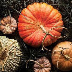 orange pumpkins + gourds