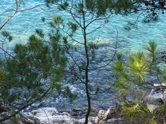 Sea - rocks and pines - Croatian Adriatic coast