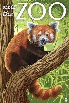 Visit the Zoo - Red Panda - Lantern Press Poster