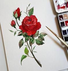 탱고장미 Tango rose illustration • Schmincke Horadam • Fabriano cold pressed 300g • Babara brushes @joezhu_