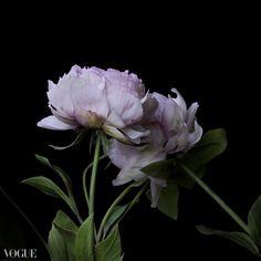 Forever Cold Porcelain Flowers, Plants, Flora, Plant