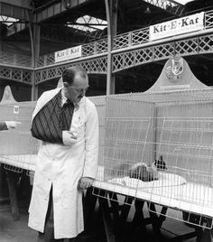 Robert Doisneau //   England  -   Chat siamois en cage, Londres 1950