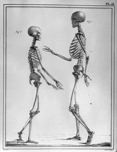 Squelettes d'un femme âgée de 22 ans, remarquable pendant sa vie par la beauté de sa physionomie, l'élégance et la régularité de ses formes, et d'un homme âgé de 38 ans, remarquable pendant sa vie par la beauté de son corps et la régularité de ses proportions] 19e siècle Auteur de l'ouvrage : CLOQUET, Jules Germain Ouvrage : Manuel d'anatomie descriptive du corps humain Edition : Paris : Béchet Jeune, 1825 Dessinateur et lithographe : Feillet Empl. de l'image : vol. 1, pl. 46