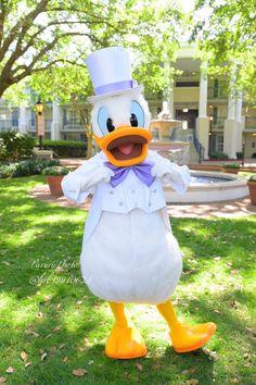 埋め込み Donald Duck Characters, Disney Best Friends, Disneyland Photography, Disney Characters Costumes, Donald And Daisy Duck, Disney Pictures, Disney Magic, Disney Parks, Ducks