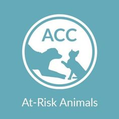 "ACC'S ""AT RISK"" FB PAGE - - Info  When Urgent was started, things were very different. The NYC ACC sent an EMAIL to New Hope Partners, showing all the animals that were at risk of dying at 6AM the following morning. They warned that it could not be shared or the New Hope Partner could lose their ability to take animals....-  Click for info & Current Status: http://nycdogs.urgentpodr.org/accs-at-risk-fb-page/"