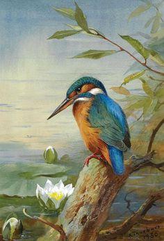 Знаменитый шотландский художник-иллюстратор Archibald Thorburn одним из величайших художников изображения птиц. Акварель. Обсуждение на LiveInternet - Российский Сервис Онлайн-Дневников