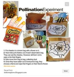 Cheeto Pollination Experiment - Little Warriors