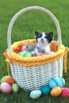Easter: kittens in a basket with eggs sprinkled around, grassy background