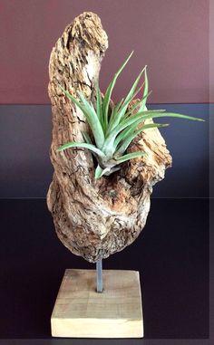 Pièce en bois flotté agrémentée d'un Tillandsia par l'Atelier de Corinne