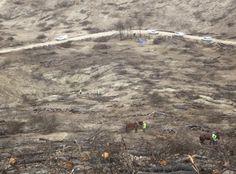 Los trabajos de reforestación del Ministerio en el incendio de Quesada, al 50 por ciento
