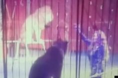 Circus Lion Tamer Faten El-Helw Attacked By Lion In Front Of Terrified Audience