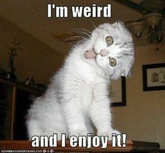 Very close to my favourite thing to tell people:  I wouldn't be normal if I wasn't weird :)