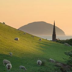 Village sheep hills. (Scotland)