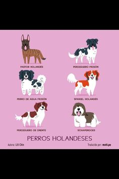 Perros Holandeses