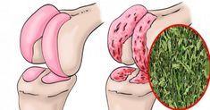 Peppermint regenerates the cartilage of the hip and knees .- La menta piperita rigenera la cartilagine di anca e ginocchia. Ecco la ricetta Regenerates cartilage of hip and knee - Cold Remedies, Health Remedies, Natural Remedies, Health And Beauty, Health And Wellness, Knee Pain, Natural Medicine, Healthy Tips, Natural Health