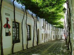 calles techadas de flores y árboles