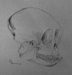 monkey skull by mars zu phobos deimos
