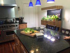 Horta do futuro, dentro da cozinha Oi-Tech Indoor Garden Usa aquaponia crescer um salada um dia - My Modern Met